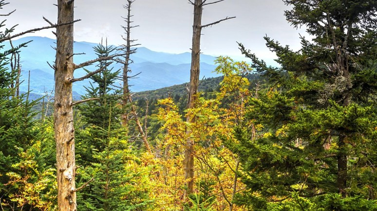 Roan Mountain Vista