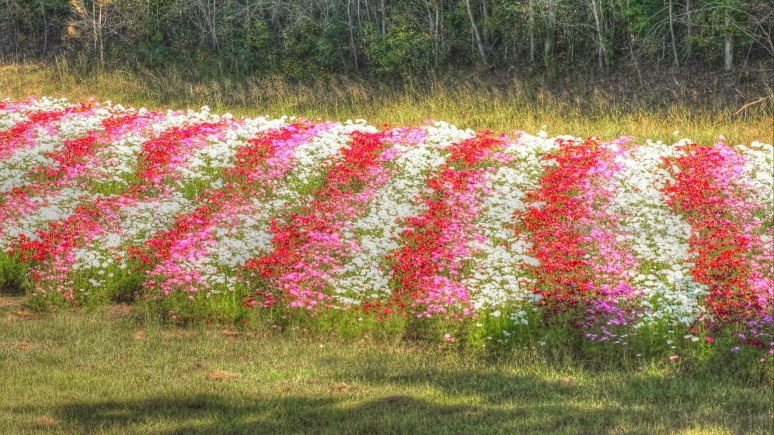 Interstate 40 striped flower beds