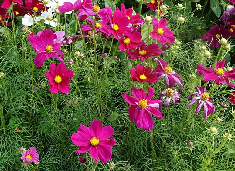 flower bed annuals