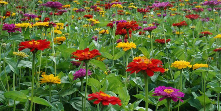 Interstate highway flower gardens in North Carolina