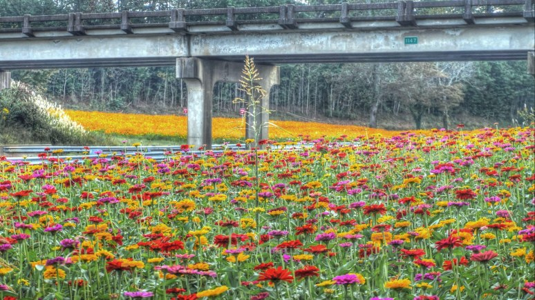 Interstate flower gardens of north carolina