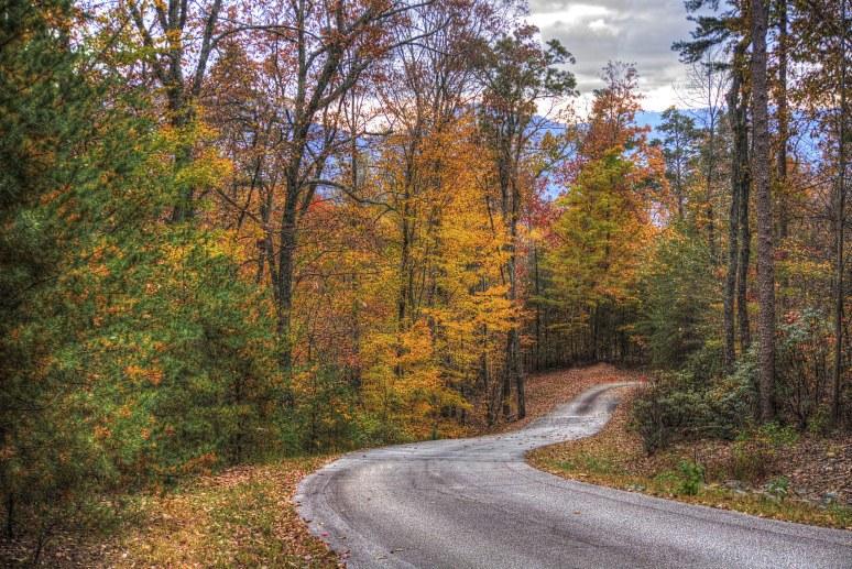 Elliot Mountain Hickories
