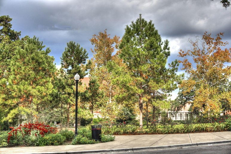 fsu trees campus