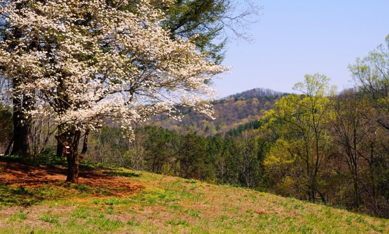 dogwood ridge