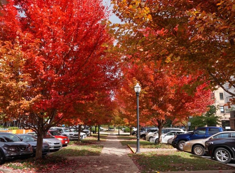 Biltmore Park 1
