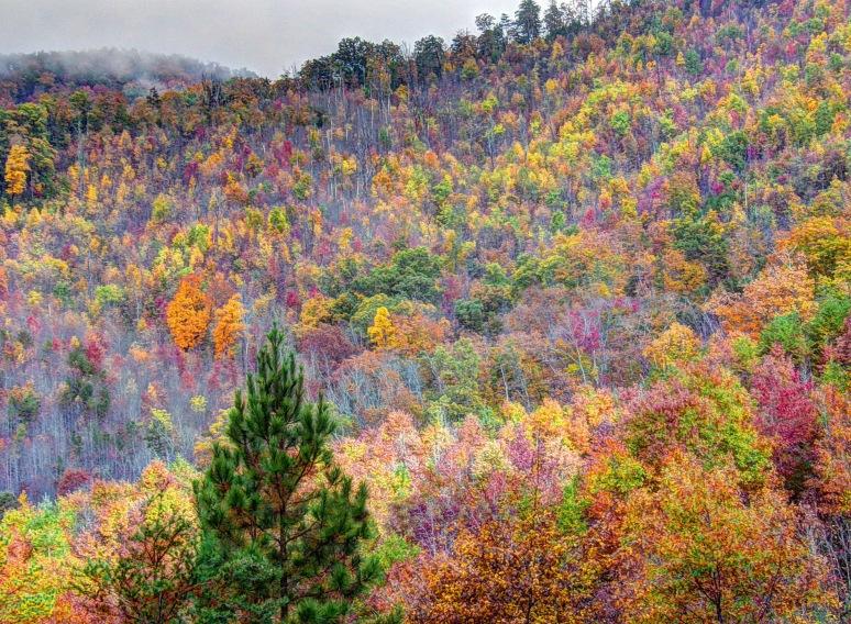 Otter Creek Color Hillside