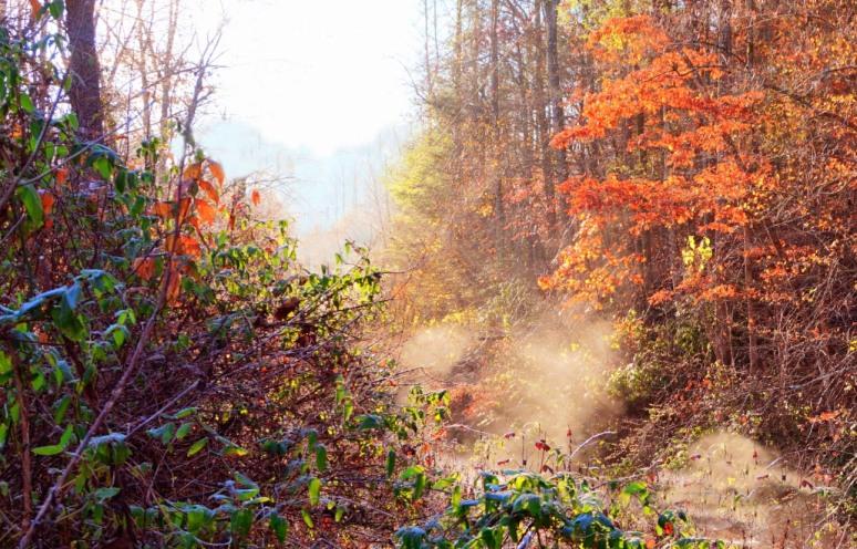 creek steam