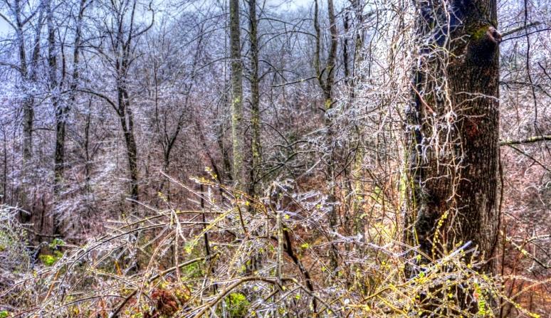 cedar creek 5