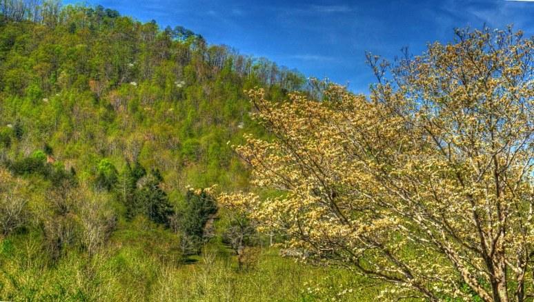 Dogwood Mtn
