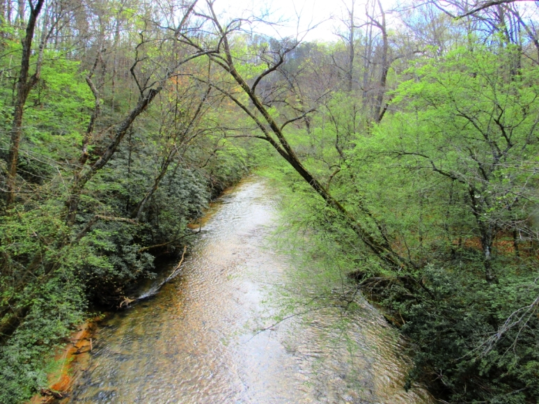 cove creek