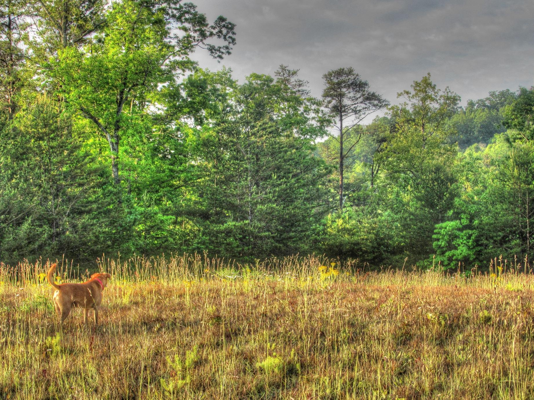 meadow 4