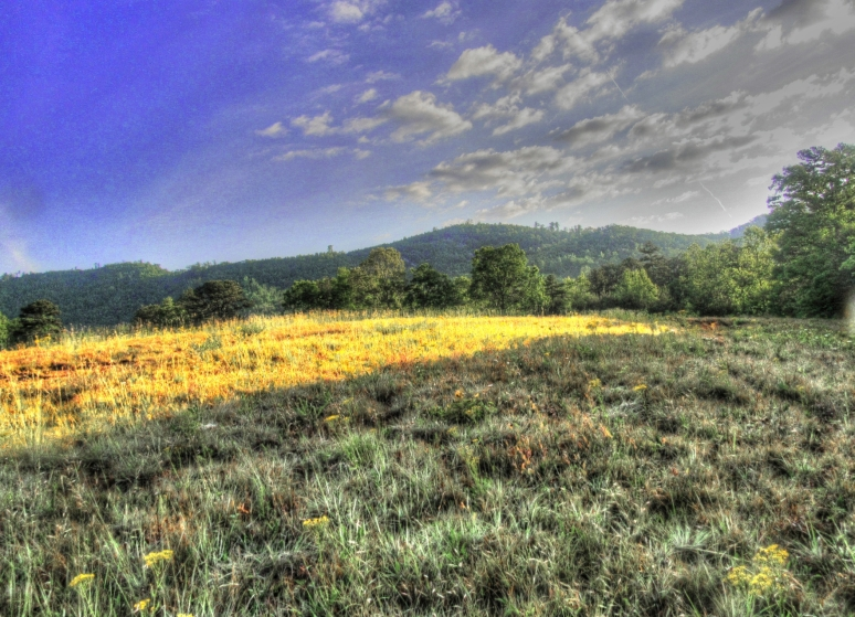 meadow 6
