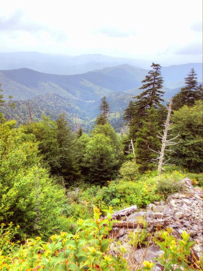 Below Clingman's Dome