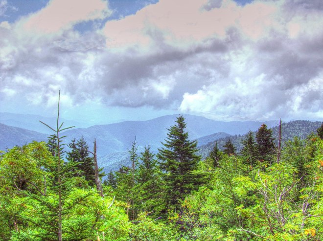 Fraser Firs at Clingman's Dome