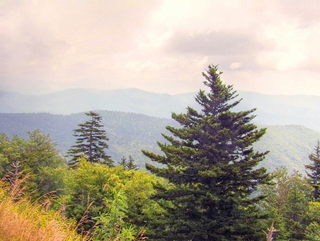 Clingman's Dome Sky