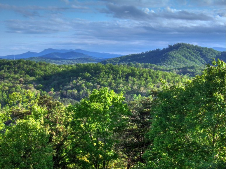 montford cove toward Tryon and Oak Mountains