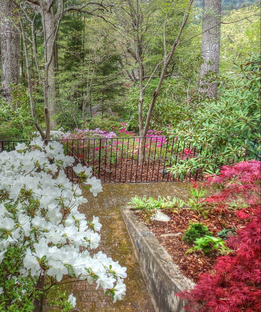 Sunset Mountain Asheville azalea garden