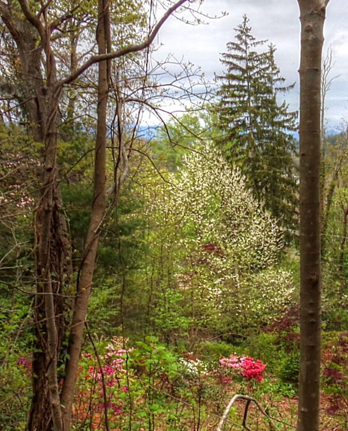 sunset mountain asheville dogwood